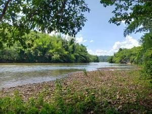 ขายที่ดินกาญจนบุรี : ที่ดิน 70 ไร่ติดแม่น้ำแควน้อย ติดแพไทรโยคมันตรา  ใกล้สวนทุเรียนที่ใหญ่ที่สุด 140ไร่ มีหาดกรวด ทำเลดี ขายพร้อมต้นยาง 20 ปี