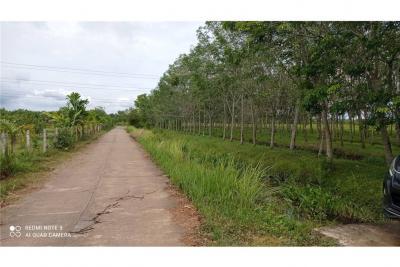 For SaleLandNakhon Si Thammarat : ขาย! ที่ดินสวนยางติดถนนสาธารณะ อ.จุฬาภรณ์, นครศรีฯ