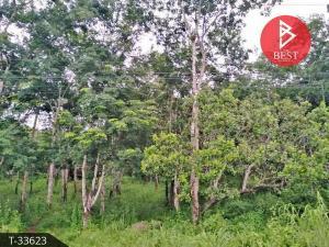 For SaleLandKanchanaburi : Land for sale 12 rai 2 ngan 65.5 square wa, Nong Lu, Kanchanaburi.