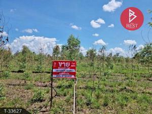 For SaleLandBueng Kan : Land for sale, cheap, area 11 rai, 3 ngan, 70 square wa, Sang Bueng Kan.