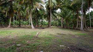 For SaleLandSamut Songkhram : Land in beautiful location, coconut plantation, Bang Khonthi District, next to Khlong Bang Bang