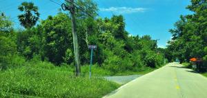 ขายที่ดินรังสิต ธรรมศาสตร์ ปทุม : ขายถูกมาก! ! ที่ดิน ปทุมธานี รังสิต คลอง 6 ติดหมู่บ้านภิภาพร-3 คลองหลวง,