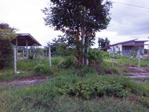 For SaleLandKanchanaburi : ## Land for sale, including transfer fee, Klondo Subdistrict, Dan Makham Tia District, Kanchanaburi Province