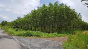 ขายที่ดินตราด : HDD-0001 ขายที่ดินสวนยาง จ.ตราด ที่ดินสวยมาก ติดถนนสาธารณะ 3 ด้าน