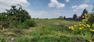 For SaleLandAyutthaya : Quick sale, land 19 rai 2 ngan 46 sq m., width 78 meters, next to 347 road, Bang Pa-in - Bang Prahan.