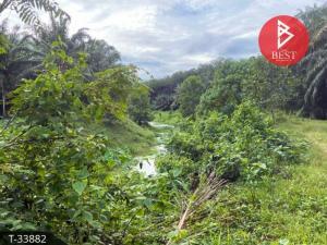 For SaleLandChumphon : Land for sale in palm plantation 13 rai 3 ngan 53.0 square wa, Pathio, Chumphon.