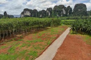For SaleLandKrabi : Large Land Plots for Sale in Picturesque Location