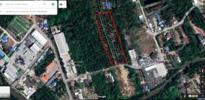 ขายที่ดินสมุทรสงคราม : ขาย!!! ด่วน ที่ดินสวนมะพร้าวน้ำหอม ใกล้แหล่งชุมชน ด้านหน้าติดถนน