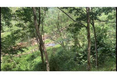For SaleLandNakhon Si Thammarat : ขายสวนยางพร้อมตัดทำเลดีสามารถทำรีสอร์ท อ.ลานสกา