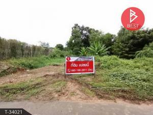 For SaleLandChanthaburi : Quick sale of land 8 rai 2 ngan 27.8 square wa, Tha Chang, Chanthaburi.