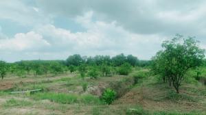 ขายที่ดินจันทบุรี : ขายบ้านพร้อมสวนผลไม้ผสมผสาน รวมเนื้อที่ขนาด 22-2-1.7 ไร่ ต.โขมง อ.ท่าใหม่ จ.จันทบุรี ใกล้หาดเจ้าหลาว