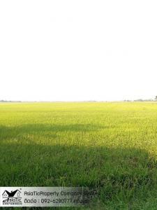 For SaleLandAyutthaya : 30 rai of land with 2 houses, 1 roadside shop, Ayutthaya Province
