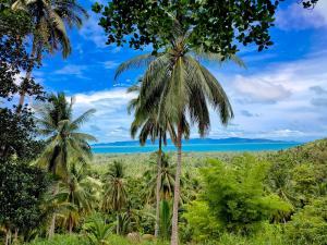 For SaleLandSamui, Surat Thani : Sea view land for sale at Baan Tai, Koh Phangan.