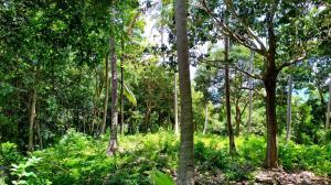 For SaleLandSamui, Surat Thani : Sea view land for sale at Hin Kong Beach