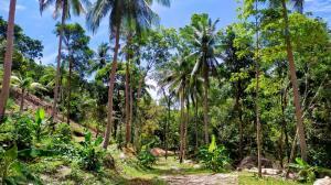 For SaleLandSamui, Surat Thani : Land for sale, sea view, Koh Phangan, very beautiful.