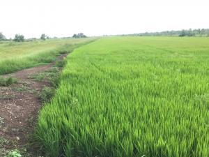For SaleLandNakhon Nayok : ที่ดิน แบ่งขาย ราคาถูก บรรยากาศ สุดชิว หลัง มหาลัย มศว. องครักษ์ ใกล้แหล่งชุมชน