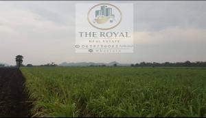 ขายที่ดินลพบุรี : 🍀 ขายที่ดิน 28 ไร่ 13 ตรว @โคกสำโรง จ.ลพบุรี (ซอยวัดชอนวรเดช ) ขายถูก เพียง 3.3 ล้านบาท