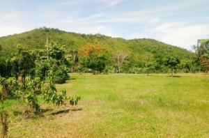 For SaleLandHua Hin, Prachuap Khiri Khan, Pran Buri : Land for Sale in Petchburi