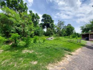 For SaleLandSaraburi : ขายที่ดิน ต.หนองสรวง อ.วิหารแดง จ.สระบุรี