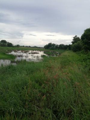 ขายที่ดินมีนบุรี-ร่มเกล้า : ขายที่ดินสวย ทำเลดี หนองจอก ซอยสุวินทวงศ์ 104จำนวน 2 งาน