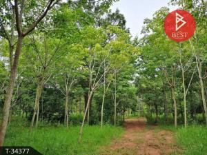 For SaleLandUdon Thani : ขายที่ดินสวนป่า 25 ไร่ 97.0 ตารางวา บ้านตาด อุดรธานี