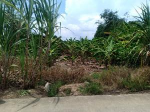 For SaleLandBangbuathong, Sainoi : ขายที่ดิน200 ตารางวา ที่ดินถมแล้ว ต.ไทรน้อย อ.ไทรน้อย จ.นนทบุรี