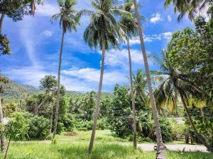 ขายที่ดินสมุย สุราษฎร์ธานี : ขายที่ดินติดถนนเส้นรอบเกาะ