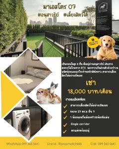 For RentCondoAri,Anusaowaree : For RENT! Pet Friendly condo #Maestro07 #Victorymonument