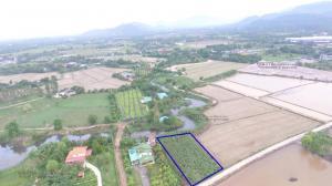ขายที่ดินนครนายก : ขายที่ดิน 420 ตร.ว. มีโฉนด วิวเขา เขตเมือง ใกล้ตลาดเท่ง ติดถนนคอนกรีต