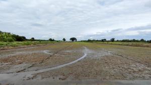 ขายที่ดินรังสิต ธรรมศาสตร์ ปทุม : ขาย ที่ดิน 4 ไร่ คลองหลวง คลอง 5 ฝั่งตะวันออก ปทุมธานี แปลงมุม เดินทางสะดวก ติดถนนคอนกรีต 2 ด้าน