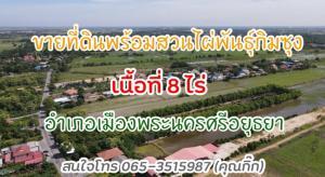 ขายที่ดินอยุธยา : R059-320   ขายที่ดิน พร้อมสวนไผ่ วิวดี ดินดี น้ำดี บรรยากาศดี อำเภอพระนครศรีอยุธยาขายสวนไผ่ 8 ไร่ 1 งาน 17 ตรว. ทำเกษตรกรแบบพอเพียง สถานที่ท่องเที่ยวทางสวนไม่ใช้สารเคมีใดทั้งสิ้นที่ดินเหมาะกับการทำเกษตรกรแบบพอเพียง  ผสมผสานสถานที่ท่อง