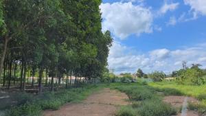 ขายที่ดินระยอง : ขายที่ดินพร้อมสวนยาง 20 ไร่ ระยอง