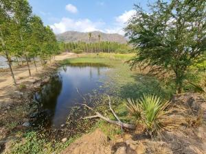 ขายที่ดินพัทยา บางแสน ชลบุรี : ขายที่ดิน 20-3-25 ไร่ ที่ดินเปล่าใกล้ทางหลวงหมายเลข7 (บายพาสชลบุรี-มอเตอร์เวย์)