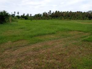 ขายที่ดินหัวหิน ประจวบคีรีขันธ์ : ขายที่ดินเปล่า ใกล้เเหล่งชุมชน ที่ดินตั้งอยู่ในเขตเทศบาลกุยบุรี ต.กุยเหนือจ.ประจวบ ฯ