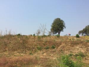 ขายที่ดินกาญจนบุรี : ขายที่ดินติดริมน้ำ ไทรโยคน้อย เนื้อที่ประมาณ 5 ไร่ มีโฉนด (ต่อรองได้)