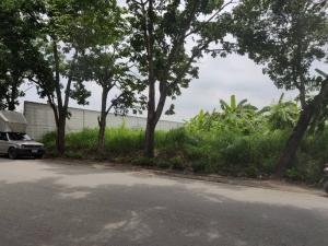ขายที่ดินบางแค เพชรเกษม : ขายที่ดินสวย ขายที่ดินพุทธมณฑลสาย2 ทำเลดีมาก ละแวกครัวต้นไทร
