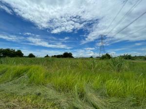 ขายที่ดินพัทยา บางแสน ชลบุรี : ขายที่ดินหนองเขิน ตำบลหนองอิรุณ อำเภอบ้านบึง จังหวัดชลบุรี