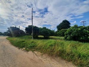 For SaleLandSaraburi : NAI570 Land in Saraburi, 16 rai 70 sq m already filled, just 1 km from Phaholyothin Road.