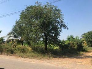 For SaleLandNakhon Pathom, Phutthamonthon, Salaya : Land 4 rai 1 ngan 7 sq m., on both sides of the road, Khlong Yong, Phutthamonthon, Nakhon Pathom.