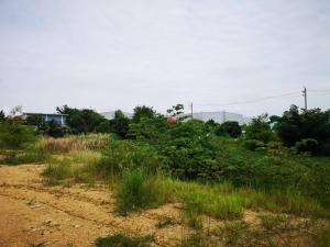 For SaleLandNakhon Pathom, Phutthamonthon, Salaya : Land for sale in Phutthamonthon Sai 4-5, next to asphalt road.