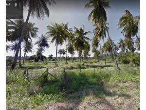 ขายที่ดินหัวหิน ประจวบคีรีขันธ์ : ที่ดิน ไร่มะพร้าว  15-2-10 ไร่  ห้วยทราย อำเภอเมือง ประจวบฯ หน้ากว้าง 55 เมตร ลึก 230 เมตร มีรายได้จากการเก็บมะพร้าว ขายถูก  ติดต่อ จูน 099 782 3241