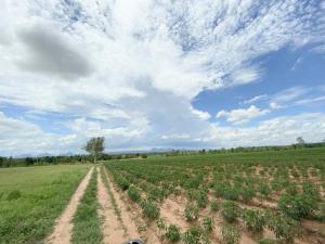 ขายที่ดินขอนแก่น : (ขายที่ดิน) เนื้อที่ 138-1-71ไร่ เหมาะทำไร่ ทำฟาร์ม อ.สีชมพู ขอนแก่น