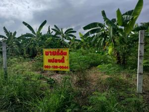 For SaleLandPinklao, Charansanitwong : Urgent sale, complete land reclamation, complete bananas Buy, invest, pay tax, rate of agriculture, Phutthamonthon 1, Soi 49 area of 169 sq.m .. 8.788 million